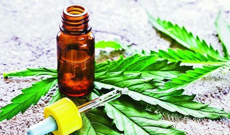 San Antonio Oeste: aprobaron el autocultivo de aceite de cannabis